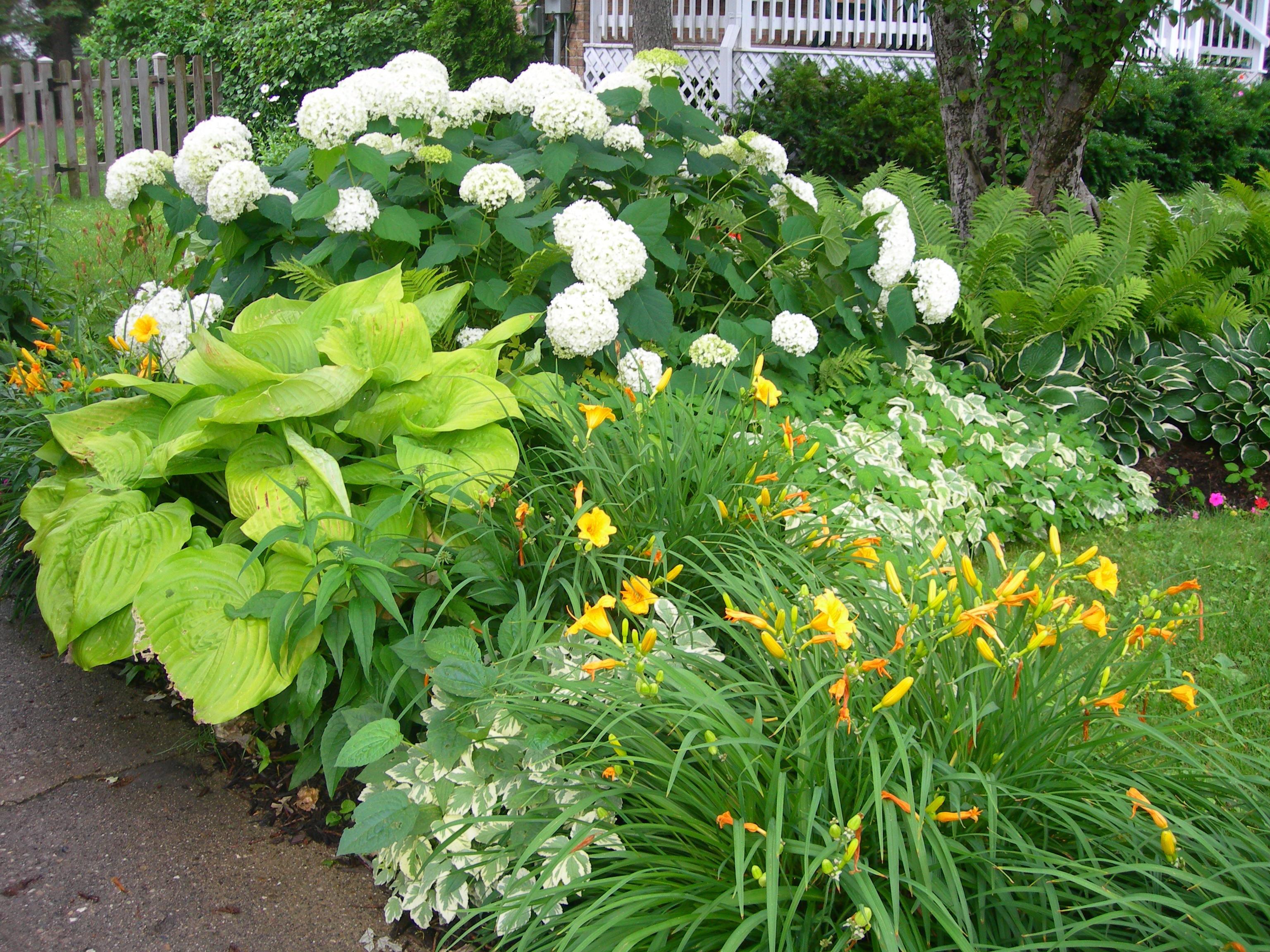 Perennial gallery for Perennial garden